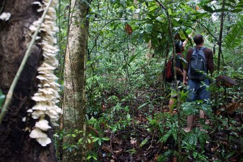 De excursión por la selva: Trekking en Koh Chang
