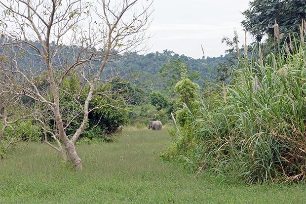 elefantes-desde-lejos