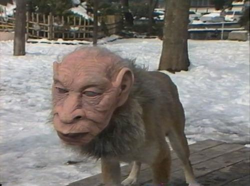 https://i2.wp.com/www.mundoesotericoparanormal.com/wp-content/uploads/2014/03/perros-rostros-humanos-japon.jpg