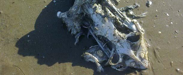 Una familia encuentra los restos de una extraña criatura marina en una playa de Inglaterra