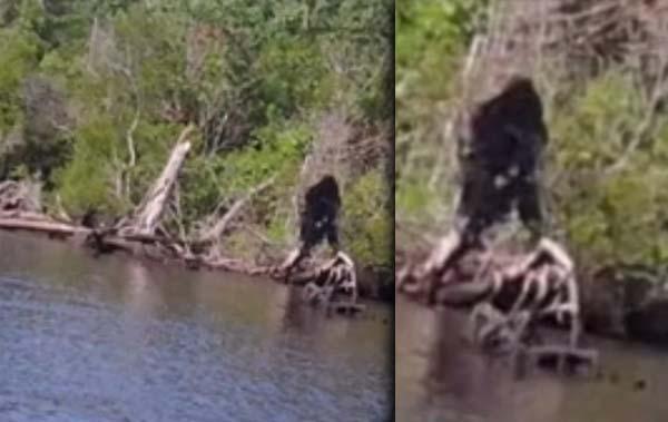 Virginia Bigfoot Rio - Un homme de Virginie prétend avoir photographié Bigfoot près d'une rivière