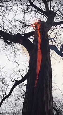Árbol diabólico