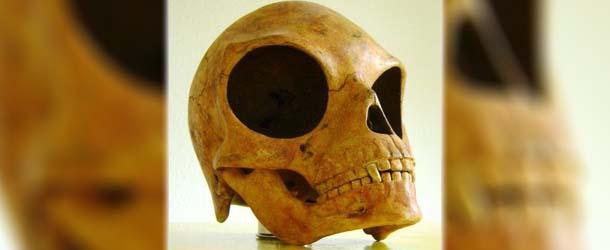 Científicos reconocen que la extraña calavera hallada en Dinamarca es extraterrestre