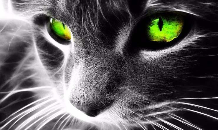 gatos malos espiritus - Los gatos: protectores del hogar, de la energía negativa y los malos espíritus