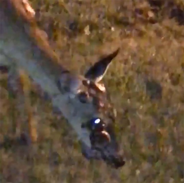 zombie deer human contagion - They record a zombie deer in the garden of a house in the United States, has contagion begun to humans?