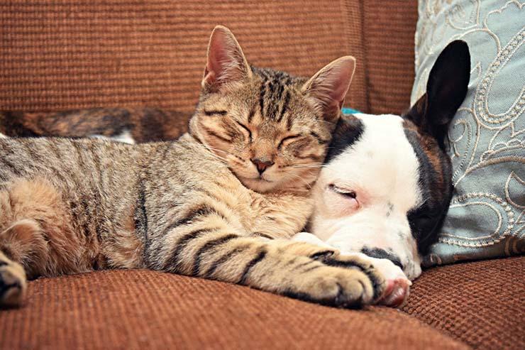 communiquer par télépathie avec votre animal de compagnie - Apprenez à communiquer par télépathie avec votre animal de compagnie