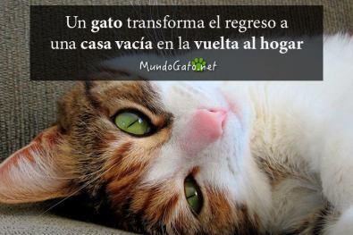 frases-para-gatos-adoptados   Mundo Gato
