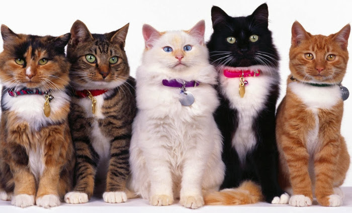 Top 10 Strangest Facts You Want to Know: Cats pee is fluorescent