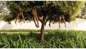 Ellen Kooi - árbol