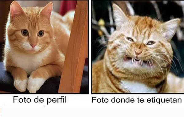 Humor Dos Minions Home Facebook