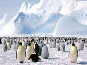 La antigua Antártida fue una selva tropical