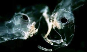 Raras criaturas que prosperan en nuestra agua
