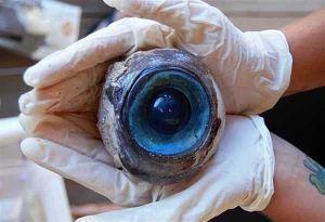 Mysterioso ojo del tamaño de una pelota de sóftbol encontrado en Pompao Beach, Florida – 10 de octubre 2012