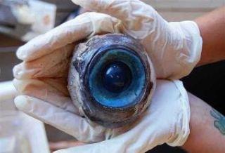Mysterioso ojo en Pompao Beach