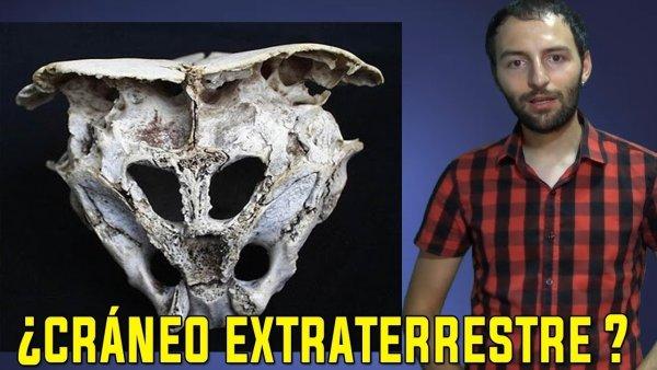 ESTOS CRÁNEOS NO SON HUMANOS – Impactantes huesos de hibrido extraterrestre