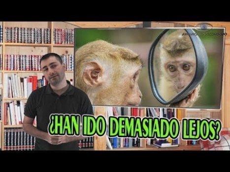 Introducen Genes del Cerebro Humano en Monos y Ocurre lo que Nadie se Esperaba