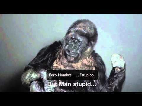 """El Gorila que """"Habló"""" y Reveló al Mundo un Impactante Mensaje"""