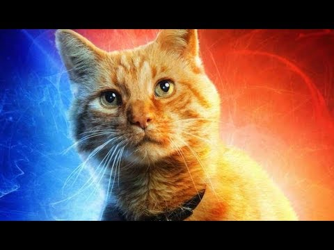 ¿Tu Gato es Psíquico?