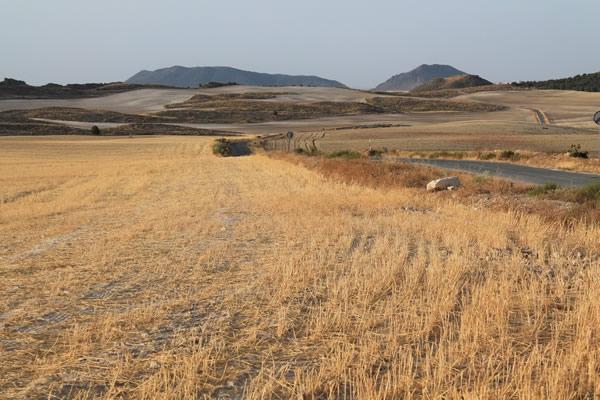 campo-de-cultivo