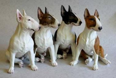 Resultado de imagen de imagenes del bull terrier