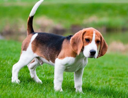 Ejercicio del Beagle