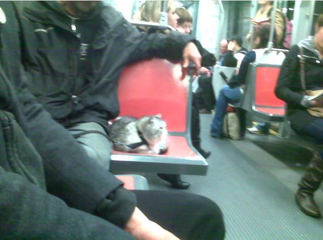 cat on muni leash