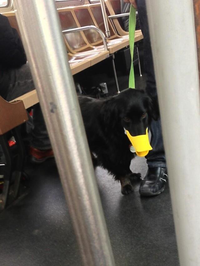 dog_duck