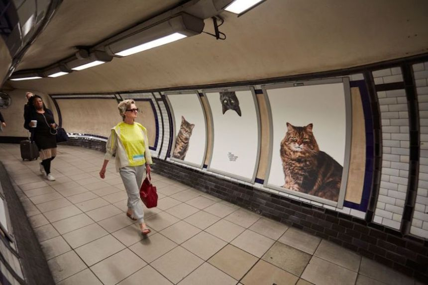 cat-photo-london-tube-walkway