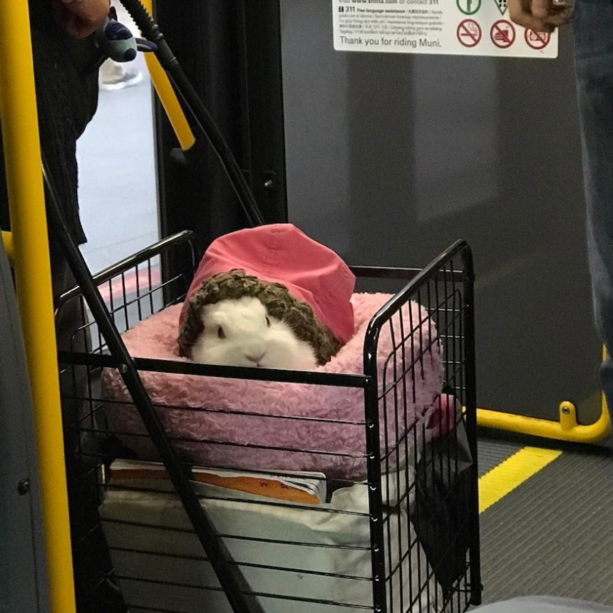rabbit bunny on muni in a bed by dhmspector