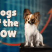 """Dogs of the Dow"" Investment Strategy: Higher Yields & Above Average Stock Price Gains"