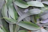Heilpflanzen Kräuter und  Wirksamkeit