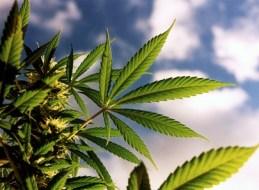 Marihuana Rauchen (Cannabis)