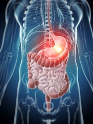 Magen und Verdauung