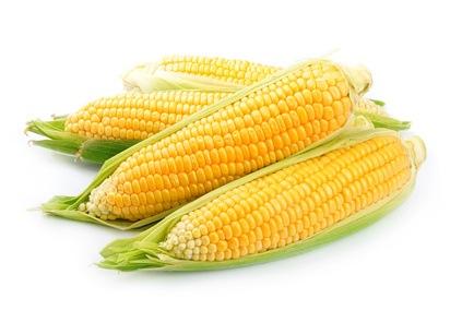 Transgener Mais