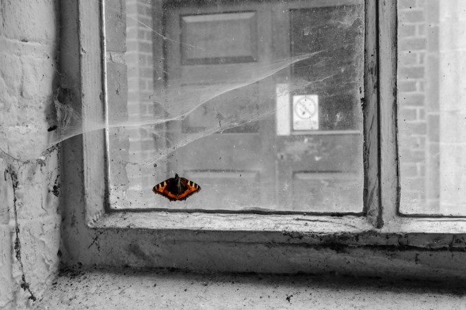 A lone butterfly lies trapped in the cobwebs of a window
