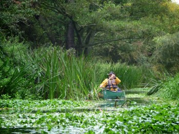 A lone canoe navigates lily pads in a still stream