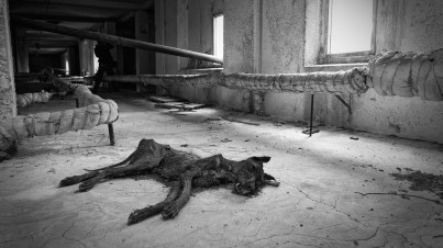 Desiccated carcass of a large dog lies on bare concrete floor beneath a window in attic of tower block