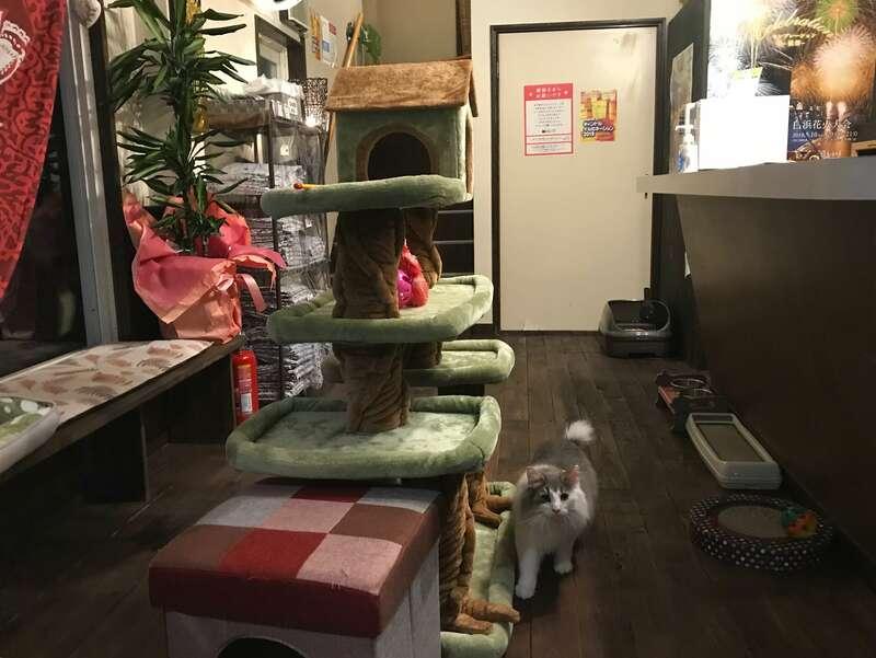 猫と過ごすバリ風民宿meongの猫