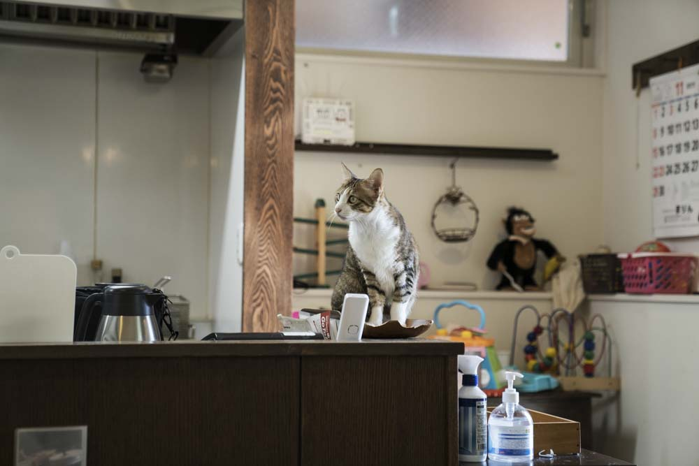 アンズカフェ 猫