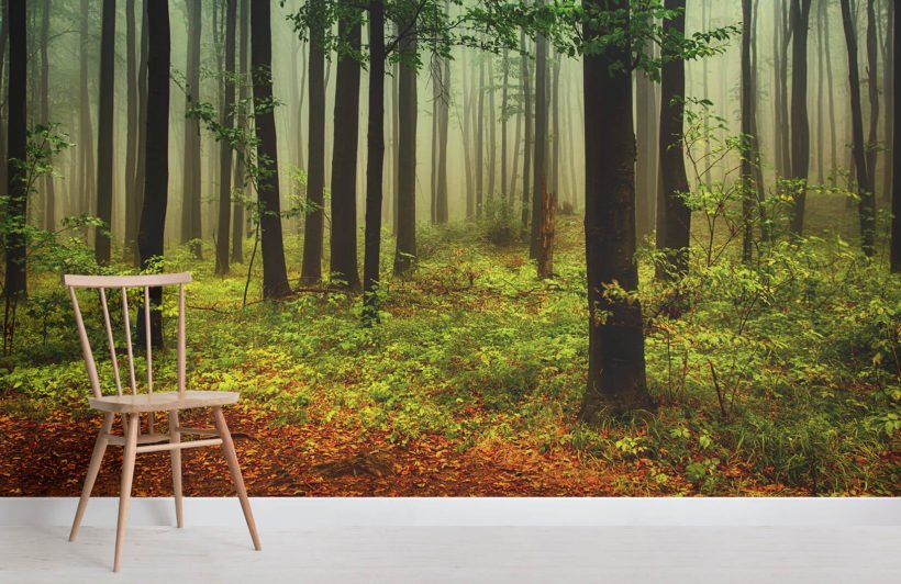 Green And Orange Misty Forest Wall Mural MuralsWallpaper