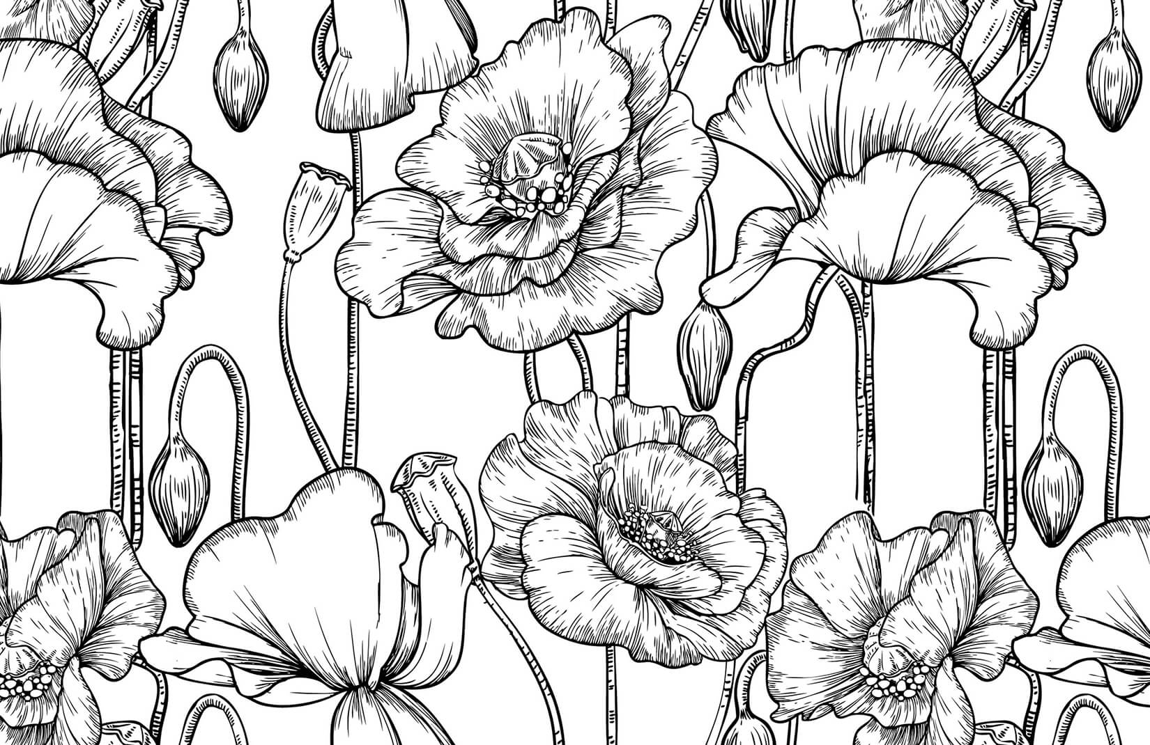 Black And White Illustrated Flowers Wallpaper Mural Murals Wallpaper