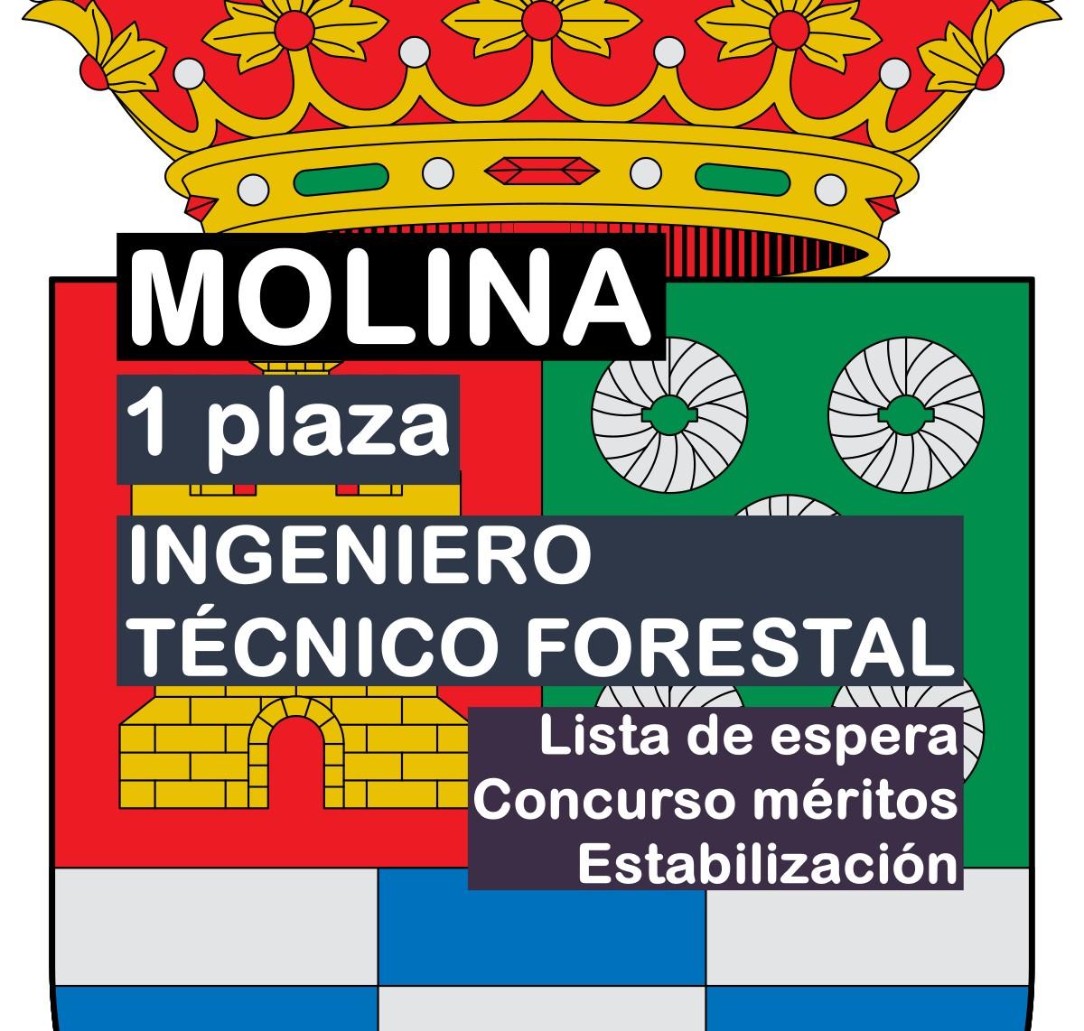 1 Ingeniero Técnico Forestal en Molina