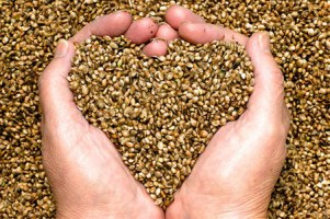 hemp-heart-benefits