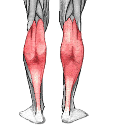 Build Muscular Calves With Calf Raises