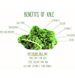 reasons-to-eat-kale