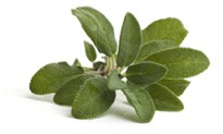 Hydroxycut SX-7 Salvia