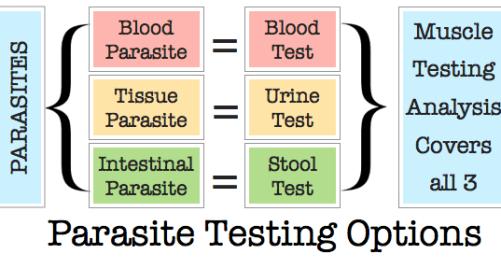 testing-options
