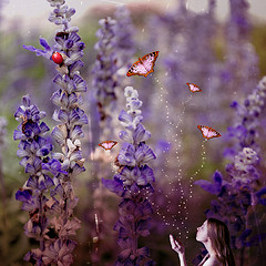 butterflies_magic