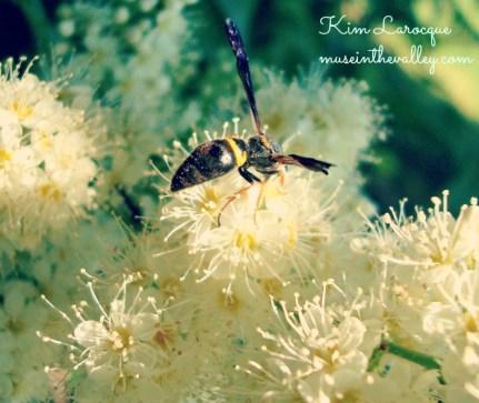 bee fluffy flower