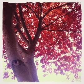 tree in october 2013